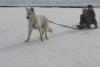Мальчик спутал Кунгур с Крайним Севером. Запряг в снегокат собаку и попал под машину