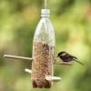Кунгуряки сделают кормушки для пернатых к Международному Дню птиц