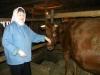 Живешь в Кунгуре - субсидию на корову не получишь