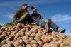 В Кунгурском районе льготная картошка