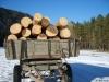 В Кунгурском районе конфликтуют из-за делового леса