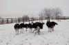 Агрокласс Кунгурского района прошел практику на страусиной ферме