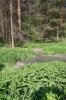Стоки из канализации загубили сосновый бор в окрестностях Кунгура