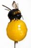 На жителей деревни Нивино Кунгурского района нападают рои пчел