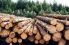 Житель Кунгурского района получил положенный ему лес только через прокуратуру