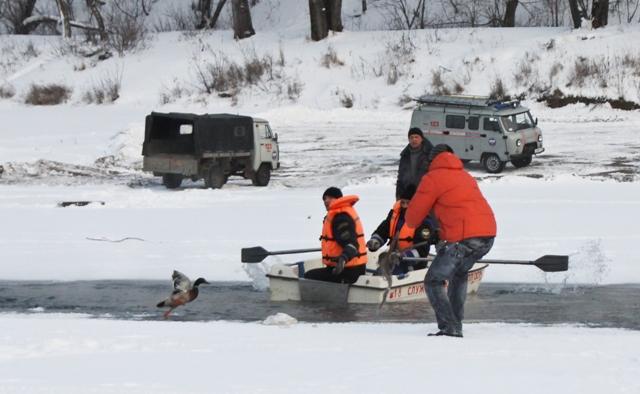 как спасти утку замерзающую в полынье
